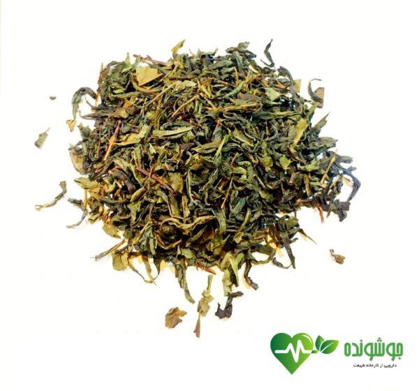 چای سبز | جوشونده