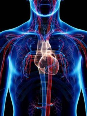 ضعف در سیستم گردش خون | جوشونده